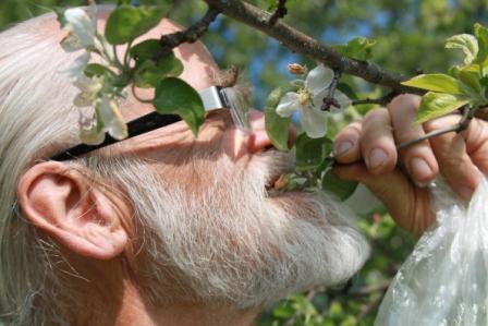 Hela blomman och bladen på äppelträdet går att äta menar Dan