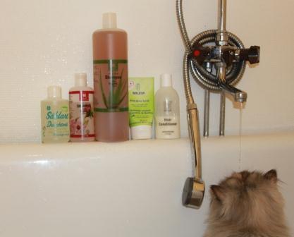 Vår minsta katt, Dina, dricker vatten i badkaret