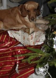 Hunden Sissi sorterar omslagspapper