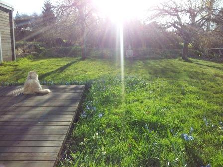Lill-katten (Dina) och jag njuter morgonsolen
