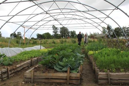 Ekologisk grönsaksodling