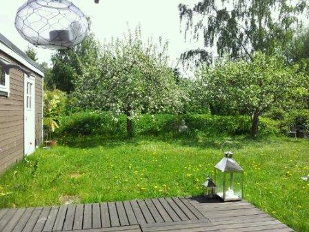 Trädgård, bild 1