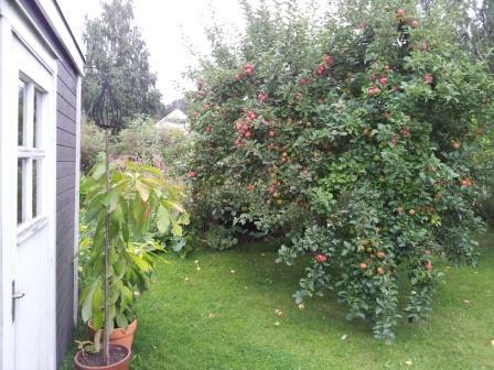 Trädgård, bild 2