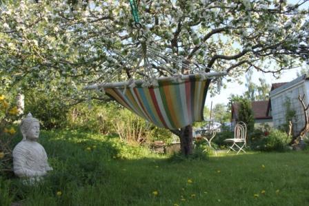 Trädgård, bild 3